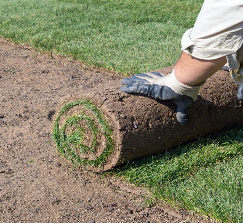 landscaping laying sod